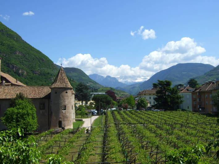 Castle and vineyard